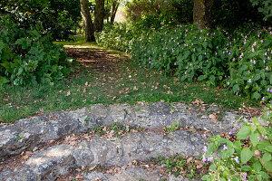 Noun : kleine Naturstein-Treppe führt in den Schattengarten unter großen Bäumen