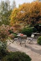 Noun : durch Bäume geschützte Terrasse, Abelia (Abelie), Liriodendron tulipifera (Tulpenbaum) in Herbstfarben, Kürbisse auf dem Tisch