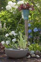 Wasserspiel mit Iris pseudacorus 'Variegata' (Sumpfschwertlilie), Alisma