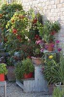 Pflanzentreppe mit Gemüse auf Kies-Terrasse