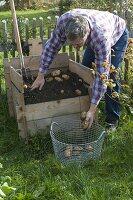 Kartoffeln in Kartoffelkiste anbauen