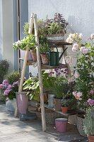 Holzleiter mit Brettern als Blumentreppe