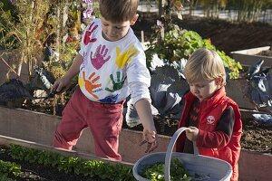 Feldsalat Ins Hochbeet Pflanzen Bild Kaufen 12190579