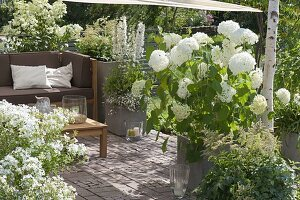 mit sonnensegel schattierte terrasse mit weissen pflanzen lounge ecke bild kaufen friedrich. Black Bedroom Furniture Sets. Home Design Ideas