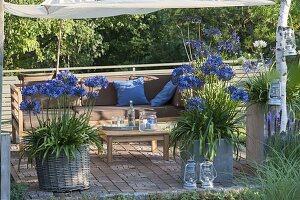Terrasse mit Sonnensegel am späten Nachmittag, Kübel mit Agapanthus