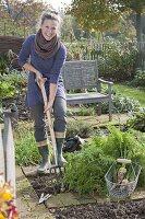 Frau erntet weisse Karotten im Biogarten