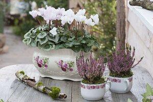 Calluna vulgaris Garden Girls 'Lena' (Knospenbluehende Besenheide)