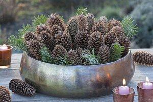 Kupferschale gefüllt mit Zapfen von Picea (Fichte) und Zweigen von Abies