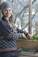 Frau erntet Spinat 'Matador' (Spinacia oleracea) im kalten Wintergarten