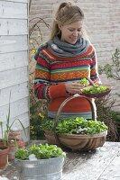 Feldsalat im Winter in Gefaessen auf dem Terrassentisch
