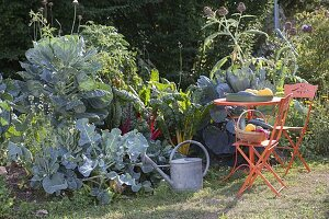Huegelbeet im Spätsommer mit Rosenkohl, Brokkoli (Brassica), Mangold