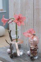 Hippeastrum (Amaryllis) in Glasflasche und einzelne Blüte