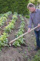 Kartoffeln im Huegelbeet anbauen