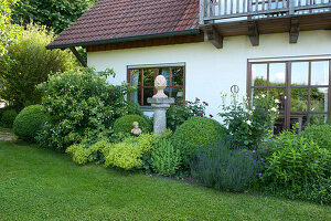 Beet am Haus mit Buxus (Buchs) Kugeln, Hydrangea petiolaris