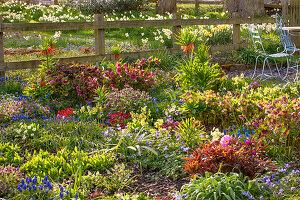 Frühlings-Beet mit Lenzrosen (Helleborus orientalis), Kaiserkrone (Fritillaria imperialis) und Pfingstrosen (Paeonia)
