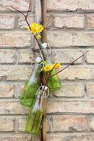 Narzissen 'Martinette' und Zweige in hängenden Flaschen