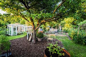 Nutzgarten mit Apfelbaum, Gewächshaus und Hochbeeten