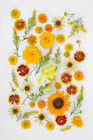 Blütentableau aus gelben und orangeroten Blüten