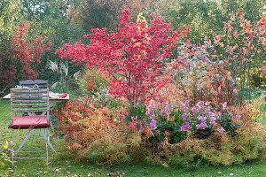 Sitzplatz am Herbstbeet mit Spindelstrauch und Herbstanemone 'Rosenschale'