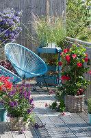 Kleiner Balkon mit Dipladenie, Chinaschilf, Enzianbaum und Engelsgesicht