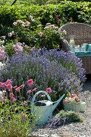 Korbsessel am Beet mit Lavendel, persischer Rose und Scheinsonnenhut