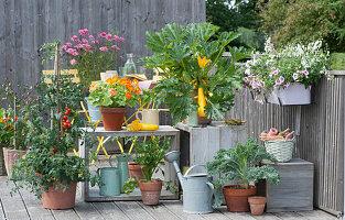 Naschbalkon mit gelber Zucchini 'Soleil', Tomate, Kapuzinerkresse 'Alaska', Sellerie, Grünkohl, Chili, Scheinsonnenhut und Balkonkasten mit Petunie und Elfensporn