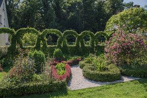Knotengarten und kunstvoll geschnittene Hecke, Rose 'Raubritter'