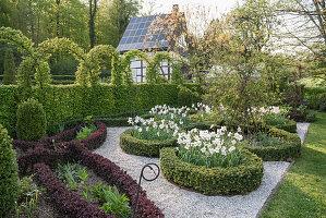 Knotengarten im Frühling mit Pfauenaugen-Narzissen, kunstvoll geschnittenen Hecke