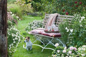 Sitzplatz auf Bank am Beet mit Aster, Herbstanemone, Dahlien und Zinnien, Hund Zula