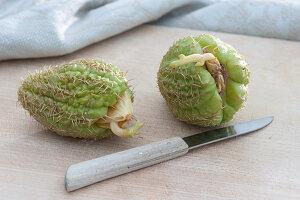 Chayote Frucht