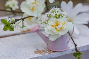 Blüten von Narzisse 'Bridal Crown' und Gänsekresse in Mini-Gießkännchen