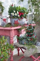 Weihnachtliches Arrangement mit Zuckerhutfichten, Christrose, Alpenveilchen und Skimmie, Zieräpfel, Stern, Zapfen und Zweige als Deko