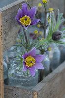 Blüten von Küchenschelle und Zweige von Kornelkirsche