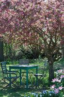 Sitzgruppe im Schatten unter Zierapfelbaum 'Paul Hauber'