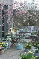 Frühlingsterrasse mit Pfirsichbaum, Primeln, Hornveilchen, Narzissen, Goldglöckchen, Tausendschön, Milchstern, Traubenhyazinthen und Sitzgruppe