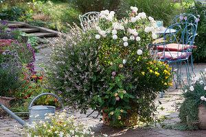 Großer Kübel mit Strauchbasilikum, Chrysantheme 'Weiße Nebelrose', Wandelröschen und Kapkörbchen, Sitzgruppe