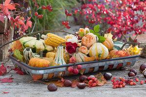 Tischdeko mit Zierkürbissen, Maiskolben, Rosenblüten und Herbstlaub
