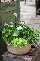 Schüssel bepflanzt mit Geranien und Tripmadame