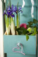 Netziris und Efeu in Schublade gepflanzt, kleines Herz und Ranunkelblüte als Deko
