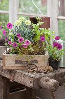 Sommerbepflanzung im Gewächshaus vorbereiten