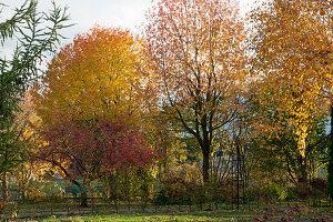 Indian Summer im Herbstgarten