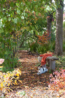 Buntes Herbstlaub auf schattigem Weg zwischen Bäumen, Hund Zula liegt an Holzbank mit Fell und Decke