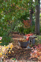 Buntes Herbstlaub auf schattigem Weg zwischen Bäumen, Laubrechen und Korb mit Blättern an Holzbank