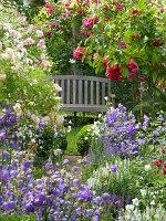 Romantisches Beet vor Holzbank mit Rosen ('Laguna', 'Ghislaine de Feligonde') und Glockenblumen