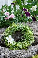 Kranz aus Ligusterblüten, strahlenloser Kamille, Blüte vom Bauernjasmin und Blättern der Schafgarbe