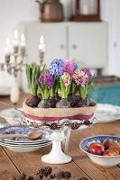 Blumen-Torte aus blühenden Hyazinthen auf Tortenfuß