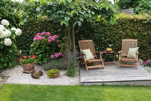 Liegestühle auf Holzdeck an der Hecke, Ulme als Schattenspender und Hortensien, Topf mit Geranie, Lavendel im Kies