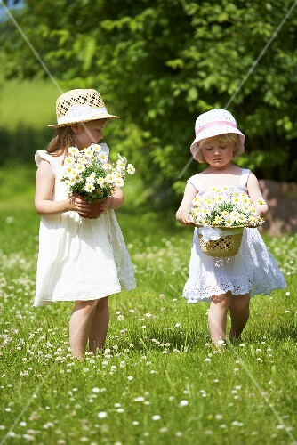Two little girls with marguerites in grass