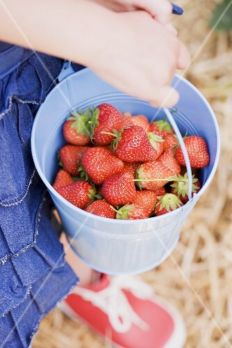 A child holding a bucket of fresh strawberries