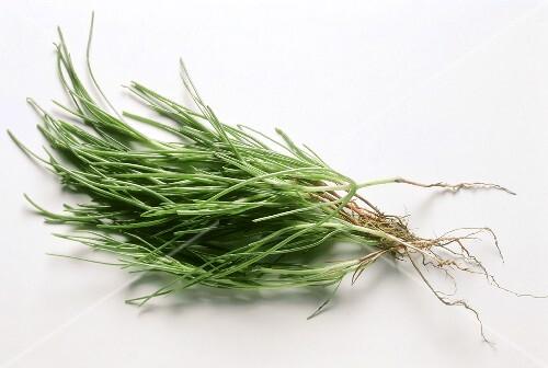 Barba di Frati (Opposite-leaved saltwort, Salsola soda)